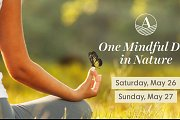 One Mindful Day