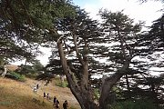 Hiking in Chouf Cedars Reserve with Profit365