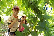 Cherry Picking Day with the Little Explore & Tour