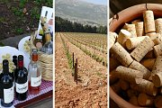 Beqaa Wine Tour and Tasting with Living Lebanon