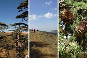 The Cedars of Tannourine - Guided Hike with Living Lebanon
