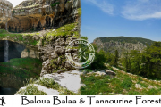 Baloua Balaa & Tannourine Forest with Wild Explorers