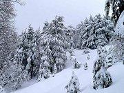 Ehden Forest Snowshoeing With Wild Adventures