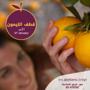 Orange Picking at Les Ateliers de Tyr