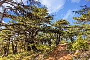Al-Chouf Cedars Nature Reserve Hike with Zingy Ride