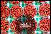 SOCIAL MEDIA MARKETING FOR PHOTOGRAPHERS: Evening Course