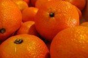 Cueillette d'oranges, clémentines et mandarines & découverte de Joun avec NEOKIDS