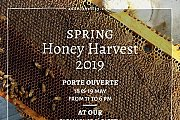 Spring Honey Harvest 2019