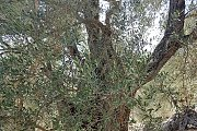 Upper Galilee Day Tour with Lebanon Discovery