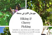 Hiking & Cherry Picking