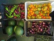 September - Badaro Urban Farmers Market