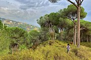 Hiking Broumana (Pet friendly) with Lebanese Explorers