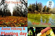 Aana Autumn Leaves: Hiking, Planting and Wine Tasting with Green Steps