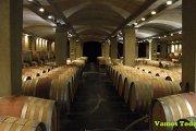 Wine Tour in Batroun with Vamos Todos
