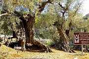 Bchaaleh-Asia Hike with Wild Adventures